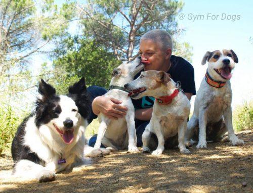 ¡Bienvenidos al Blog de Gym for Dogs!