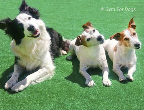 Fitness canino: qué es y para qué sirve